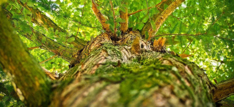 Pielęgnacja i wycinanie drzew